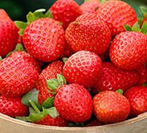 奶油草莓采摘(无催熟催甜剂