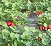 北京佳佳农业采摘园