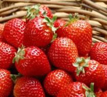 好吃的草莓采摘开始咯园