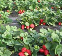 圣地水果蔬菜采摘