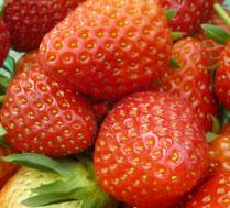 海淀凤凰苑草莓采摘