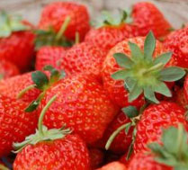 怀柔双利双园草莓采摘园