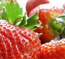 老房草莓园采摘