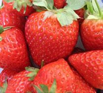 马上有莓您与孩子开心农场梦