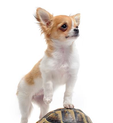 各种狗的图片_各种宠物狗品种加名字图片