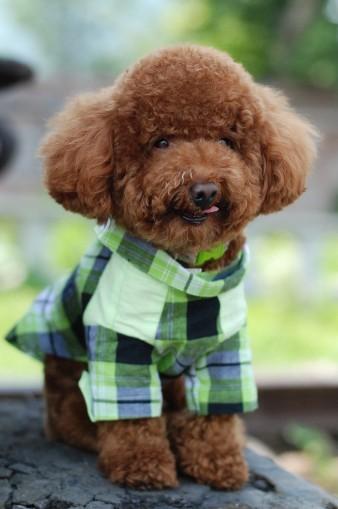 宠物狗穿衣服的好处